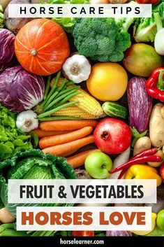 What fruit and vegetables can horses eat? And what can't they eat? Here we tell you what you can and can't feed your horse or give as a treat. Kinds Of Vegetables, Kinds Of Fruits, Fruits And Veggies, Homemade Horse Treats, Vegetable Snacks, Horse Care Tips, Horse Facts, Healthy Pumpkin, Stuffed Hot Peppers