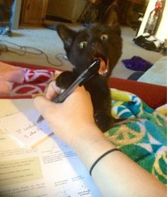 This little kitten who NEEDS TO NOT WITH THE WRITING UTENSILS. | 17 Cats Who Need To Get A Grip