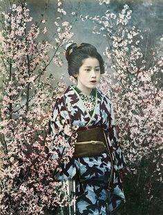 Geisha among cherry blossoms, 1891.