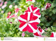 very nice original flowers