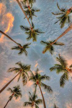 #palms