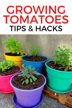 Tips For Growing Tomatoes, Growing Veggies, Grow Tomatoes, Vegetable Garden For Beginners, Gardening For Beginners, Gardening Tips, Diy Garden Furniture, Diy Garden Projects, Garden Ideas