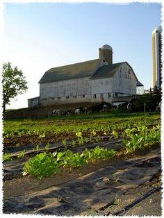 Wellhausen Farm (Wheaton/Carol Stream)  organic farm w/CSA