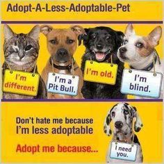 I love my pit bull,old chow, cerebellar hypoplasia kitten, cat with a burnt face - less adoptable pets are the best! Dog Love, Puppy Love, Puppy Mills, Mundo Animal, Animal Rescue, Rescue Dogs, Shelter Dogs, Pet Adoption, Animal Adoption