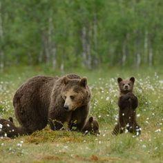 Bears! Love them so much!