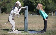 Advanced level dog training