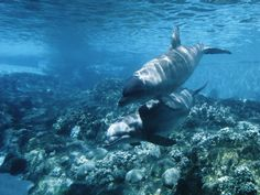 #1: Swim With Dolphins. Check!