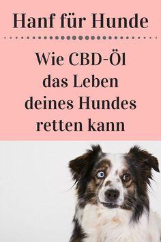 Hund, Gesundheit
