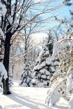 Beautiful Minnesota Winter.... or what I like to call Home :)