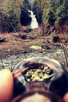 high adventures ( marijuana cannabis )
