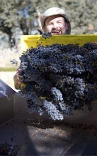 Winemaking | Gargiulo Vineyards