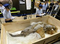 Mammoth Skull And Possibly Complete Skeleton Found In Idaho