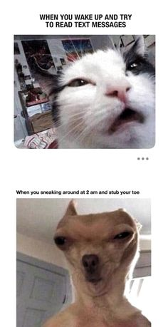 animal memes make me laugh clean / animal memes make me laugh . animal memes make me laugh cat . animal memes make me laugh videos . animal memes make me laugh clean Funny Animal Jokes, Funny Animal Photos, Crazy Funny Memes, Really Funny Memes, Stupid Funny Memes, Cute Funny Animals, Funny Relatable Memes, Haha Funny, Funny Photos