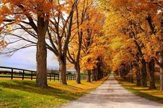 The driveway to my country home... :)