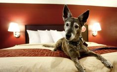 26 Hotel Chains That Are Dog Friendly And Won't Break The Bank