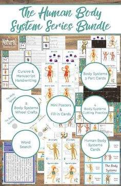 I think you will be as excited as we are about learning about human anatomy this year. We have an awesome human body system series bundle that is simply perfect for this unit! Human Body Activities, Science Activities For Kids, Science Curriculum, Kindergarten Science, Science Lessons, Homeschool Curriculum, Preschool Themes, Science Ideas, Sensory Activities