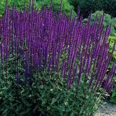 1000 images about plants for keeping on pinterest. Black Bedroom Furniture Sets. Home Design Ideas