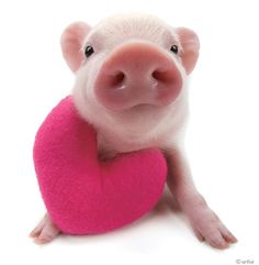 I can't help but pin pigs. They're too cute