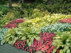 Hostas and impatiens - great combination for shady areas.