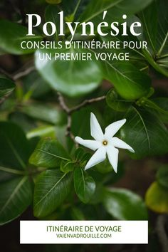Bon Plan Voyage, Belle France, Organiser, Blog Voyage, French Polynesia, Destinations, Voici, Plant Leaves, Around The Worlds