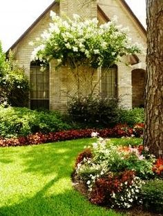Myrtles in Southern Landscaping Nice color accents this house.Nice color accents this house. Crepe Myrtle Landscaping, Southern Landscaping, Home Landscaping, Front Yard Landscaping, Houston Landscaping, Backyard Patio, Garden Shrubs, Diy Garden, Dream Garden