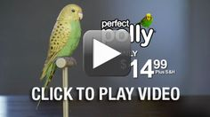 Perfect Polly Pet - Yes this was on his list.