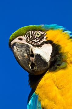 These birds are so beautiful and interesting! You can always get amazing shots of them... #colors #Pirates