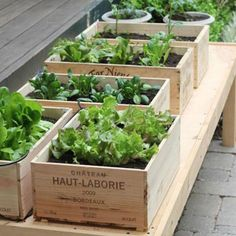 Des caisses en bois en guise de jardinières / utiliser des caisses en bois pour la terrasse
