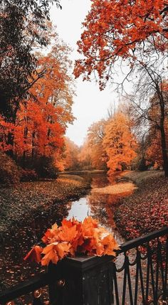 Orange Aesthetic, Autumn Aesthetic, Fall Pictures, Fall Photos, Fall Images, Fall Season Pictures, Pretty Pictures, Wallpaper Fofos, Cute Fall Wallpaper