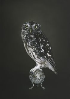 Prosperity by Jane Crisp - Art Prints New Zealand Jackson Bird, New Zealand Art, Nz Art, Owl Photos, Kiwiana, Wall Art For Sale, Bird Pictures, Art Drawings, Fine Art Prints