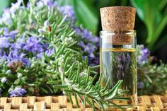 Best ways to use rosemary oil for hair growth. Top rosemary oil uses and benefits. Simple rosemary recipes for hair care. How to use rosemary oil for hair? Essential Oils For Hair, Essential Oil Uses, Pure Essential, Natural Hair Growth Treatment, Rosemary Oil For Hair, Rosemary Herb, Home Remedies For Acne, Natural Remedies, Hair Growth Oil