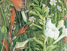 """Olímpia Reis Resque: Um jardim tropical. Sente-se o cheiro da terra úmida e, no ar, o perfume das flores"""". Leia o texto completo de Victor W. von Hagen (1908-1985) sobre os odores das plantas que encontrou em uma floresta tropical. Ilustração de Marianne North (1830-1890). No Blog!"""