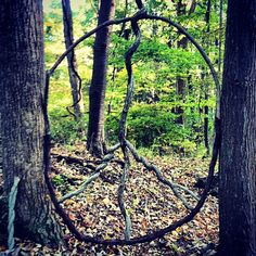 Peace sign in the park. #nature