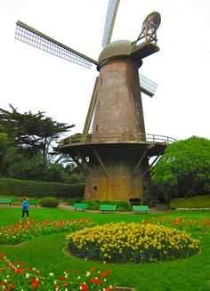 Feel free to enjoy Spring a few days early in Golden Gate Park.