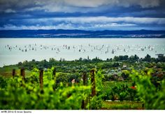 Photo by Aron Szanto - 2016 with over 600 boats Lake Balaton, Hungary. Pretty Pictures, Cool Photos, Sailing Pictures, Photography Competitions, Hungary, Vineyard, Mountains, World, Boats