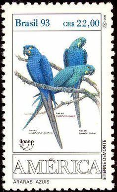 Araras azuis,  (Anodorhynchus hyacinthinus),  Arara-azul-grande,  Hyacinth Macaw , or Hyacinthine Macaw, Brazilian Stamp, 1993