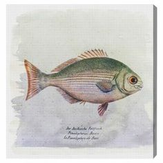 Lend aquatic appeal to your living room or den with this eye-catching canvas print, depicting a fish motif.  Product: Canvas printConstruction Material: Canvas and woodFeatures:  Limited open edition with certificate of authenticity by the artistMade in the USAReady to hang  Cleaning and Care: Dust lightly using a lint-free cloth