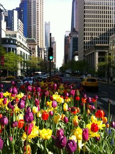 Chicago - Michigan Ave Spring Tulips