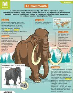 Fiche exposés : Le mammouth                                                                                                                                                                                 Plus
