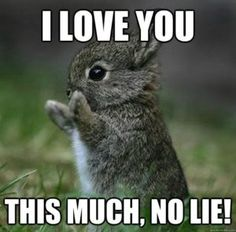 Best I Love You Funny Meme Funny Rabbit Funny Bunnies Cute Funny Animals
