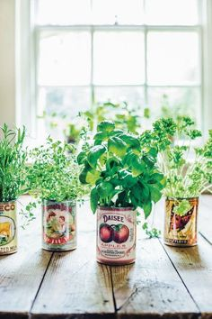 A Guide to Indoor Gardening