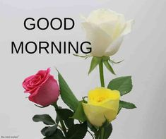 Good Morning Wishes With Rose - [Best HD Images] ~ Good morning inages Good Morning Couple, Good Morning Friends Images, Funny Good Morning Images, Good Morning Beautiful Pictures, Good Morning Images Flowers, Good Morning Roses, Good Morning Picture, Morning Pictures, Morning Wish