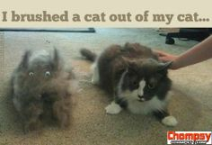 LOL Hairy cat