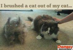 LOL Hairy cat