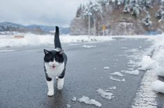 一直餵飼、拍攝、幫助「福島飯館村遺棄貓狗」的攝影師上村雄高 | 攝影札記 Photoblog - 新奇好玩的攝影資訊、攝影技巧教學