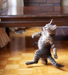 a walking cat