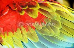 ailes colorées — Image #2369090