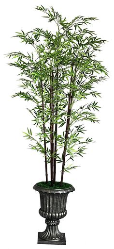 Laura Ashley VHX106208 86-Inch Black Bamboo Tree in 16-Inch Fiber Stone Planter >>> Click image for more details.