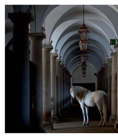 Horse, Portugal