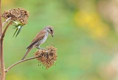 Early Bird, Photography Tips, Crisp, Creatures, Pictures, Animals, Animais, Animales, Photos